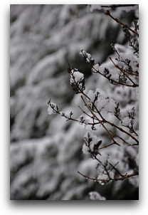 winter-nikon-1.jpg